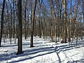 2016-01-31 13 32 06 A snow-covered trail in a snowy woodland eight days after the Blizzard of 2016 in the Franklin Farm section of Oak Hill, Fairfax County, Virginia.jpg