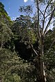 2019-04 Blue Mountains National Park 26.jpg