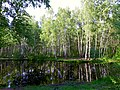 2184. Pond in the northeast of the park Sosnovka.jpg