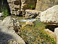 22 Wadi Bin Hammad Tropical Rain Forest Trail - Shallow Water Falls - panoramio.jpg