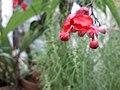 2flower 0180912 120559.jpg