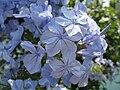 4224 - Thun - Flowers.JPG
