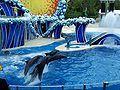 4 דולפינים.JPG