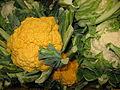 7367-Brassica oleracea var. botrytis.JPG