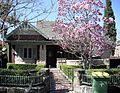 7 Boomerang Street Haberfield with Magnolia.jpg