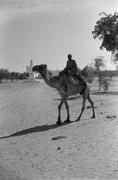 ASC Leiden - NSAG - van Es 6 - 007 - A man rides a camel (or dromedary) on a dirt road - On the road from Geneina (Al-Junaynah), West Darfur, Sudan to Abéché, Ouaddaï, Chad - 1-1-1962.tif