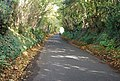 A Kentish byway in Autumn - geograph.org.uk - 1025007.jpg