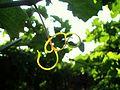 A Natural Green Thread.jpg