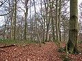 A beech woodland - geograph.org.uk - 1088261.jpg