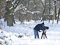 A cameraman in woods at Newlands Corner, Albury Downs, north of Albury, Surrey, 2009 (1149112).jpg