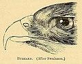 A dictionary of birds (1893) (14775115133).jpg