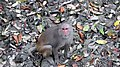 A monkey in Sundarbans East Wildlife Sanctuary.jpg