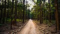 A nature track in the Jim Corbett National Park.jpg
