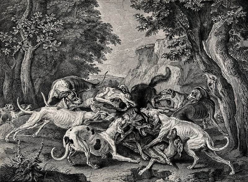 File:A pack of dogs fighting each other ferociously in a forest. Wellcome V0021845.jpg