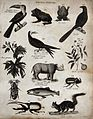Above, a toucan, two frogs, a bird, an avocet, two sprigs of Wellcome V0020674ER.jpg