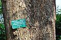 Acharya Jagadish Chandra Bose Indian Botanic Garden - Howrah 2011-01-08 9799.JPG