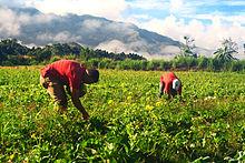 Agricultura de subsistencia yahoo dating