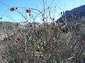 Agricultura a Puebla de Arenoso - 7.jpeg