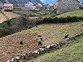 Agricultura tradicional.jpg