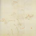 Aimitsu-1941-Lilies.png