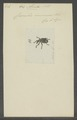 Alcides - Print - Iconographia Zoologica - Special Collections University of Amsterdam - UBAINV0274 030 03 0003.tif