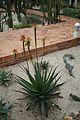 Aloe Lutescens-Zambia (2) (11984068476).jpg