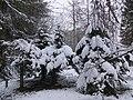 Alpine Pines at home in the Arboretum - Jan 2013 - panoramio.jpg