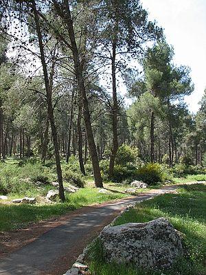 Aminadav - Aminadav forest