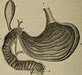 An academic physiology and hygiene (1903) (14594661727).jpg
