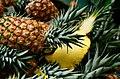 Ananas e Boswellia.jpg