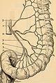 Anatomie médico-chirurgicale de l'abdomen (1922) (14782562964).jpg