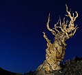 Ancient Bristlecone Pine Forest National Monument.jpg