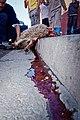 Animal sacrifice at Eid at Adha 10.jpg