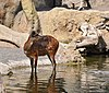 Animales bioparc-valencia-2012 (7).JPG