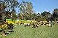 Annual Flower Show - Agri-Horticultural Society of India - Alipore - Kolkata 2013-02-10 4723.JPG