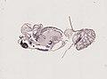 Araneae (YPM IZ 093455).jpeg