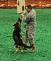 Armed Forces honored at Houston livestock show; 'Black Jack' soldiers enjoy rodeo festivities 120229-A-CJ112-258.jpg
