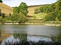 Arundel, Swanbourne Lake - geograph.org.uk - 1501883.jpg