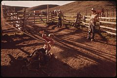 At the Oldlands' Summer Cow Camp, Fifteen Miles South of Their Piceance Creek Ranch. Hired Hand Jake Spends an Idle Moment Practicing Roping, 07-1973 (3815026583).jpg