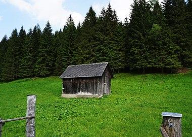 Auenmoos, Hochmoor Gemeinde Metnitz, Kärnten.jpg