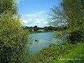 August Rheintal - Alt Rhein - panoramio.jpg