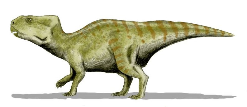 Auroraceratops BW