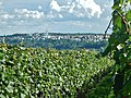 Ausblick über das Neckartal - panoramio.jpg