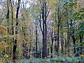 Autumn Colour - Nov 2012 - panoramio.jpg