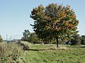Autumn comes to Webb's Heath - geograph.org.uk - 1551691.jpg