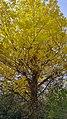 Autumn season in Butanic Garden فصل پاییز در باغ بوتانیکال تفلیس 44.jpg