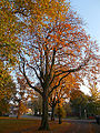 Autumnal Sutton Green, SUTTON, Surrey, Greater London (10).jpg