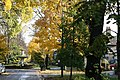 Autumnal Westbourne Avenue, Hull - geograph.org.uk - 1038237.jpg