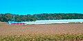 Av Roth Feeder Pig Facility - panoramio.jpg