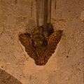 Avignon - Collégiale Saint Agricole 24.JPG